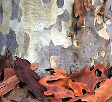 Spotted Gum Tree - Australia by Mette  Spange