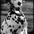 BLACK AND WHITE DOG by Katseyes