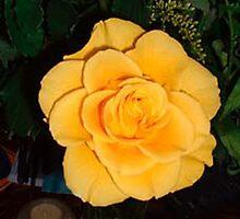 Rose by Kathye