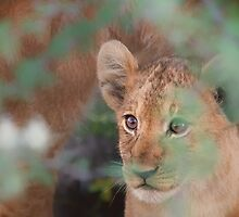 Cub's Safe Place by Owed to Nature