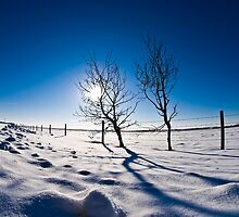 Alberta Winter Morning by gresl
