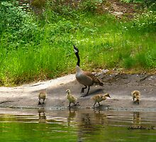 MAMA'S FAMILY by Madeline M  Allen
