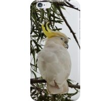 2nd Young Sulpher Crested Cockatoo!  Native, Australia. iPhone Case/Skin