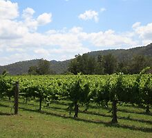 Hunter Valley, NSW by Rebecca Anne Hodges