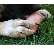 DOG LICK BONE Photographic Print