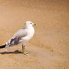 seagull in the sand by rue2