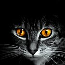 Cat Eyes by Kimberly Palmer