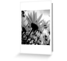 Daisy Sky  Greeting Card