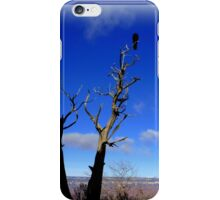 Raven in a Tree iPhone Case/Skin