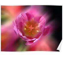 Blur Tulips Poster