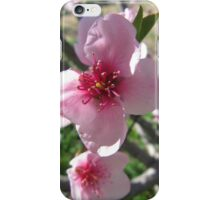 Nectarine Blossom, Mount Pleasant. Adelaide Hills. S.A. iPhone Case/Skin