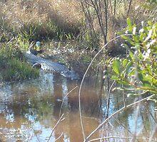 Gator Lake by Melissa King