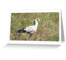 African Secretary Bird Greeting Card