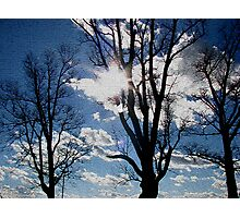 Crackled Trees Photographic Print