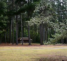 The Old Cricket Pitch - Hollybank Forest Reserve by Janice E. Sheen