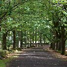 The Avenue - Hollybank Forest Reserve by Janice E. Sheen