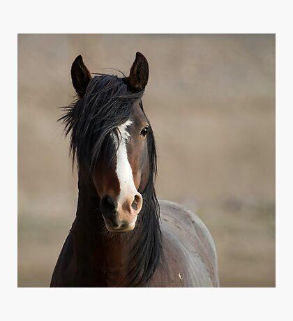 Curious Wild Stallion Photographic Print