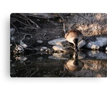 Mirror, Mirror... (crop) Canvas Print
