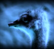 Electric Blue Emu by Lesley Smitheringale