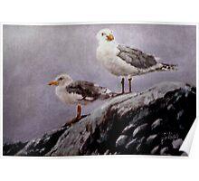 Resting Gulls Poster