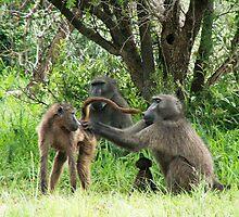 Baboon bonding by GRAEMEGM