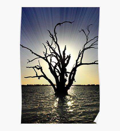 Lake Bonney Tree Poster