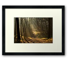 In the Stillness of the Forest Framed Print
