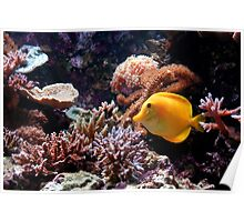 A Tropical Fish on the Reef Poster