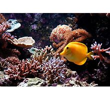A Tropical Fish on the Reef Photographic Print