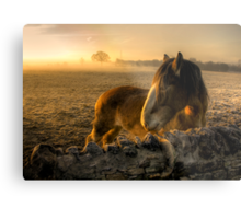 Sunrise Over Inquisitive Eyes Metal Print
