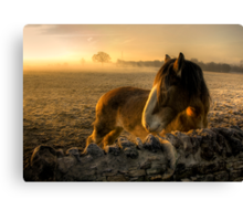 Sunrise Over Inquisitive Eyes Canvas Print