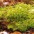 Mossy Lime Green by lorilee
