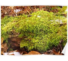 Mossy Lime Green Poster