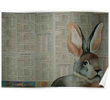 The Riverine Rabbit - Endangered Species Project Poster