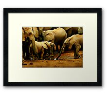 Drinking With The Herd Framed Print