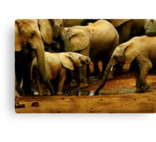 Drinking With The Herd Canvas Print