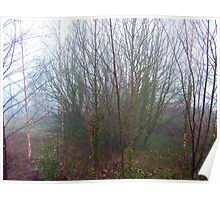 Foggy Glade Poster