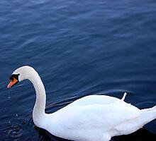 Swan by jadiz89