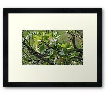 0029 - HDR Panorama - Plum Blossoms 1 Framed Print