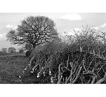 Fences... Photographic Print