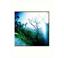 Trail of trees Art Print