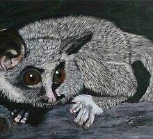 The Lesser Bush Baby by Alexart