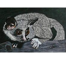 The Lesser Bush Baby Photographic Print