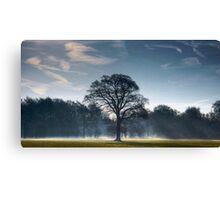 Backlit Tree Canvas Print
