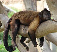 lazy days by ClaireTiltman