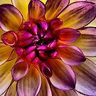 Flower Power by Jamie Lee