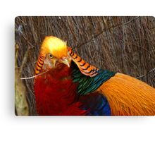 Bright & Beautiful - Golden Pheasant - NZ - Invercargill Canvas Print