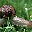 Snail in the Grass by Debbie Sickler