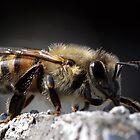Bee Extreme by Debbie Sickler
