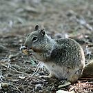 Squirrel 2 by Debbie Sickler